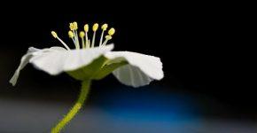 sihirli bitkiler nelerdir